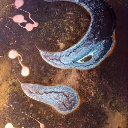 Crescent and Tadpole Nebulas